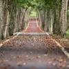 Ce drum îți alegi în viață?